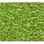 Live Duckweed for sale